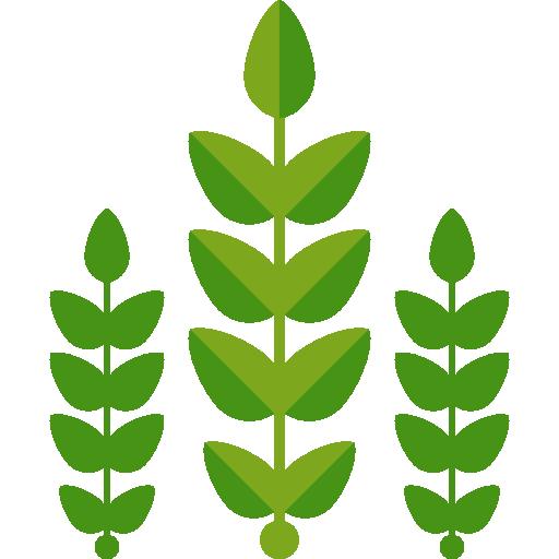 nogal vivero plantas