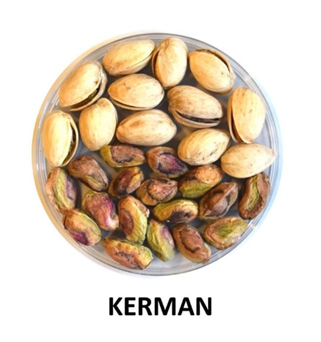 vivero pistacho extremadura castilla la mancha KERMAN
